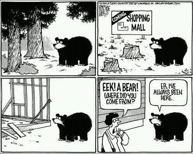 Bear cartoon strip